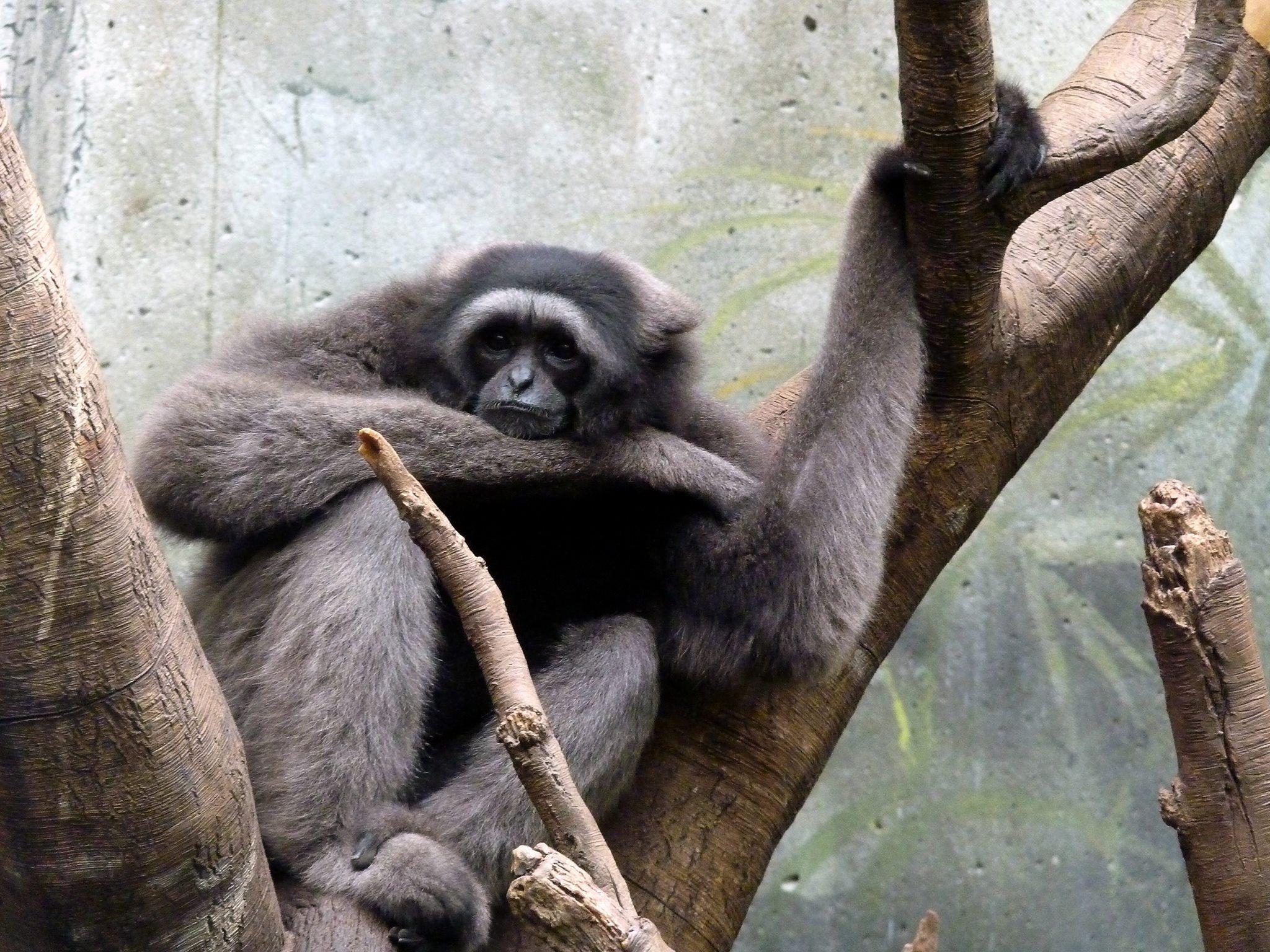 think monkey